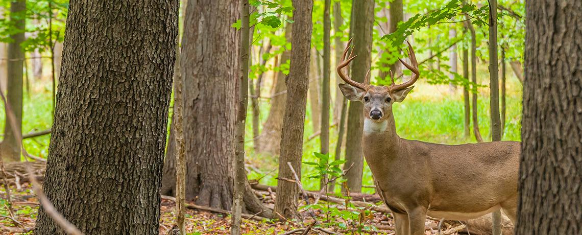Deer Harvest Donations